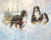 Bernese Christmas Cards - 15 cards