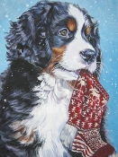 BMD puppy holding a Christmas stocking in mouth chrismas cards